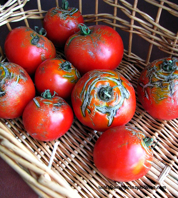 Blemished-Tomatoes